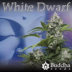 White Dwarf auto